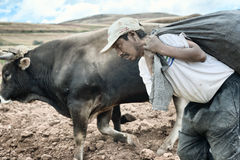 Sharecropper carrying large sack of potatoes for cultivating royalty free stock image