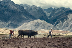 Sharecroppers plowing a field for potatoes, Urubamba Valley, Peru stock photo