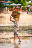 Shared Beach. Jungutbatu, Lembongan, Bali, Indonesia - May 12, 2010: Seaweed farmer carrying a basket of harvested seaweed to the be dried Stock Photography
