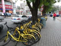 Shenzhen, China: Shared Bicycles Parked on the Street royalty free stock photo