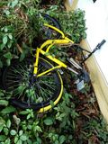 Shared bikes were thrown to the ground Royalty Free Stock Photography