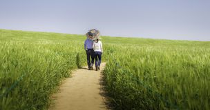 A Shared Journey. Gochang in South Korea just before the harvesting of the Barley. I saw this couple walking together through the barley trails taking selfies Stock Images
