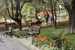 Shariati park at spring season tulips field. Tehran- IRAN April 11, 2017- Shariati park at spring season, tulips field royalty free stock images