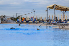 Sharing the pool with gulls Royalty Free Stock Images