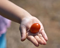 Sharing tomato. Little girl sharing grape tomato stock images