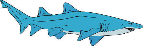 Shark. Vector - big shark isolated on background Stock Photo