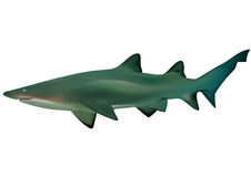 Shark. 3D illustration of a shark Royalty Free Stock Images