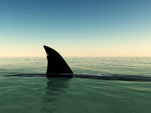 Shark. That has surfaced on the water Royalty Free Stock Images