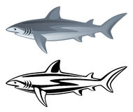 Shark. On a white background Royalty Free Stock Photography