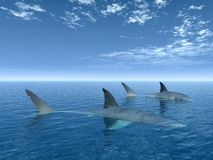 Shark2 Fotografia Stock Libera da Diritti