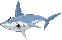 Shark. On a white background, vector Stock Images