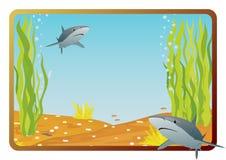 Shark Royalty Free Stock Photography