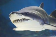 Shark. In the deep sea Stock Photo