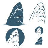 Shark. Vector illustration of shark in variuos background Stock Illustration