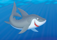 Shark Stock Image