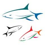 Shark. Vector illustration of shark banner On white background Royalty Free Stock Photography
