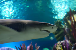 The shark Stock Photography