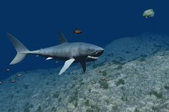 Shark in 3D Royalty Free Stock Photos