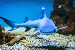 Free Shark Royalty Free Stock Photography - 40893267