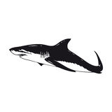 Shark. Illustration of a white shark Stock Images