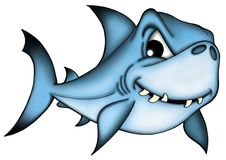 Shark. Color Illustration of blue shark Stock Photography