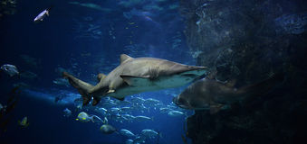 Free Shark Stock Photo - 54569450