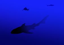 Shark. On the background of the deep orchid color royalty free illustration