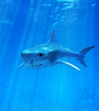 Shark. In blue wather . 3d render Royalty Free Stock Images
