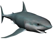 Shark. A white shark isolated on white in 3d Royalty Free Stock Images