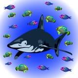 Shark5 Royalty Free Stock Photos