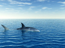 Shark_Alone Stock Photo