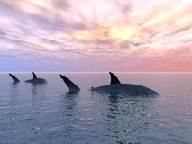 Shark_Alone Stock Images