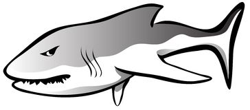 Shark Angry. A simple great white shark that seems a little hungry and angry vector illustration