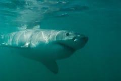Shark approach Royalty Free Stock Photos