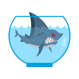 Shark in Aquarium. Angry Marine predator with large teeth. Home Royalty Free Stock Photos