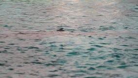 Shark in Aquarium stock video