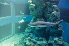 Shark in a aquarium Stock Photography
