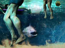 Shark attack Royalty Free Stock Photo