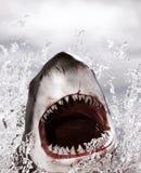 Shark attack. Horror shark attack,3d illustration concept background Stock Photos