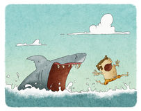 Shark attack. Illustration of a shark attacking a swimmer Royalty Free Stock Image