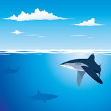 Shark Background. Dog fish and underwater life in the submarine Royalty Free Stock Photography