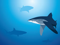 Shark Background Stock Photography