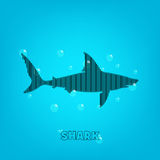 Shark background Royalty Free Stock Photo