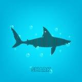 Shark background Royalty Free Stock Photo