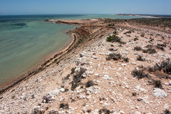 Shark Bay coastline Stock Photography