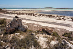 Shark Bay Royalty Free Stock Image