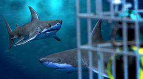 Shark cage diving Stock Photo
