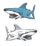 Shark cartoon. hand drawn. vector eps8 Stock Photos