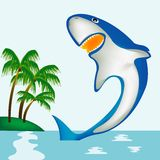 Shark beside coast of the tropical island Stock Images