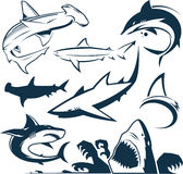 Shark Collection Royalty Free Stock Photo